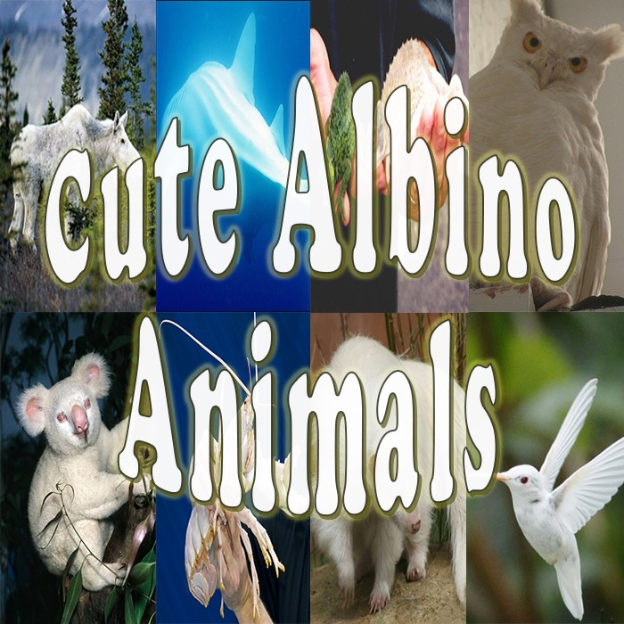 albinism-happen-animals-too-15-cute-albino-animals-proof